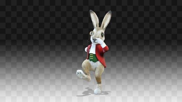 Rabbit Oliver Tap Dance