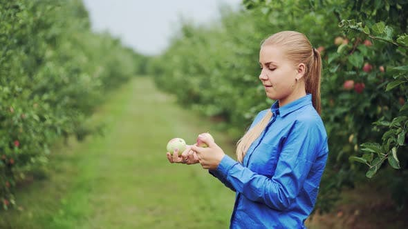 Thumbnail for Beautiful Young Woman Picking Ripe Organic Apples