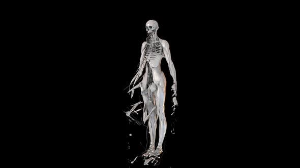 Thumbnail for Female Anatomy