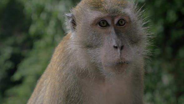 Monkey Under The Rain