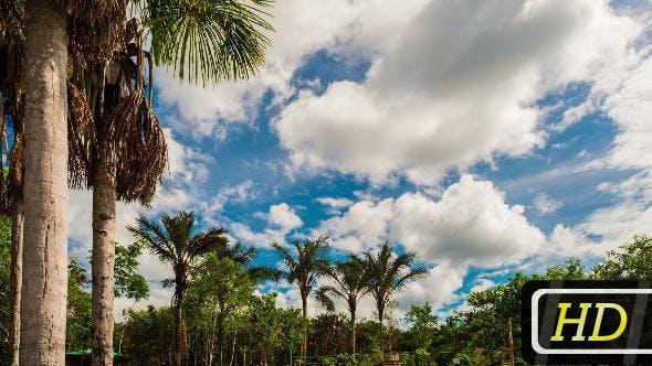 Brazilian Tropics