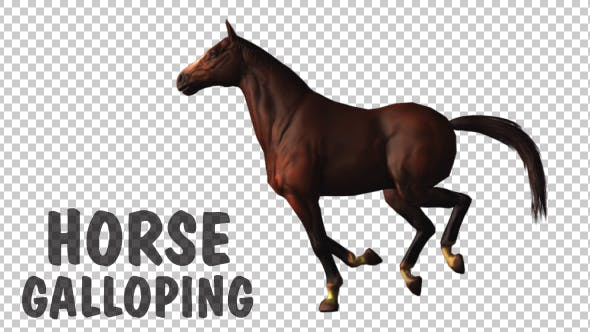 Thumbnail for Horse Gallop Loop