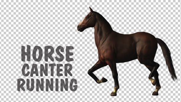 Thumbnail for Horse Canter Loop