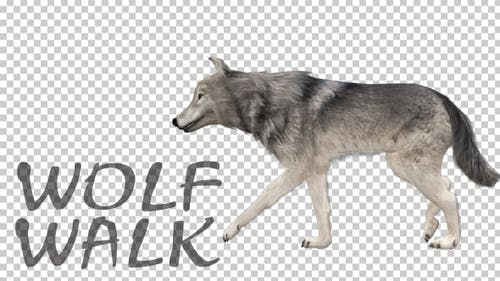 Realistic 3D Wolf Walk Animation