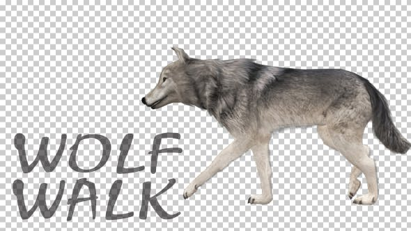 Thumbnail for Realistic 3D Wolf Walk Animation