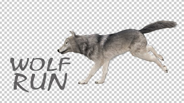 Thumbnail for Realistic 3D Wolf Run Animation