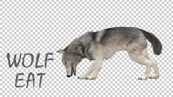 Thumbnail for Realistic 3D Wolf Eating Animation