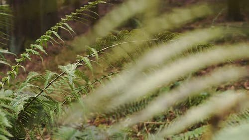 Green fern close up, in a autumn forest, over fallen leaves