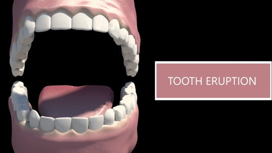 Thumbnail for Tooth Eruption