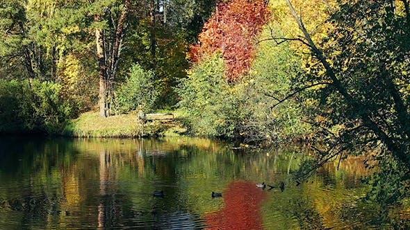 Thumbnail for Ducks on Autumn Lake