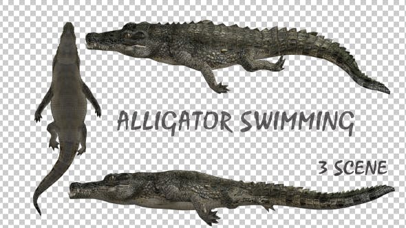 Thumbnail for Crocodile - Alligator Swimming - 3 Pack