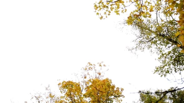 Thumbnail for Autumn Forest With Different Trees Over Sky 8