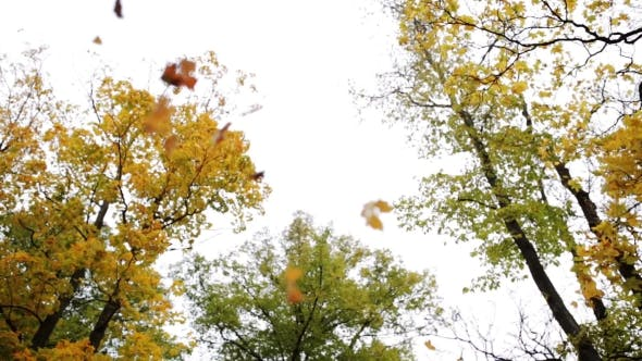 Thumbnail for Autumn Forest With Different Trees Over Sky 9