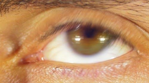 Rotation des yeux du globe oculaire