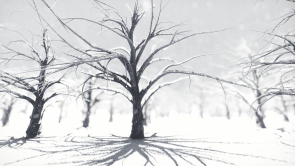 Thumbnail for White Forest