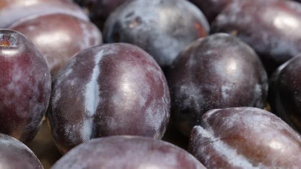 Thumbnail for Close-up of purple common plum Prunus domestica  4K tilting video
