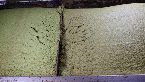 Milled Olives For Olive Oil Production