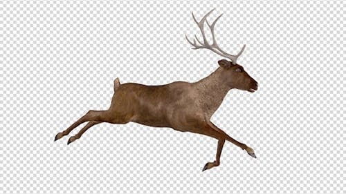 Red Deer - Jump Run Cycle - Right Side View
