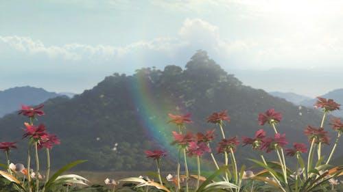 Mountian Flowers