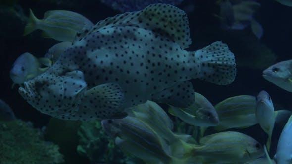Thumbnail for Diverse Unterwasserwelt im Ozeanarium ausgestellt