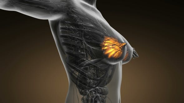 Thumbnail for Human Body With Visible Glow Mammary Gland