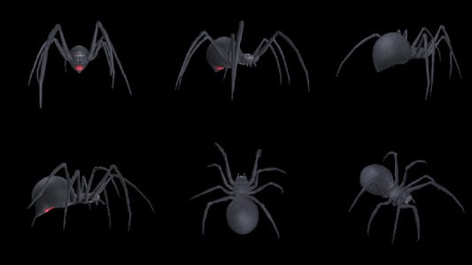 Thumbnail for Spooky Spider - Black Widow - Walk Loop - Pack of 6