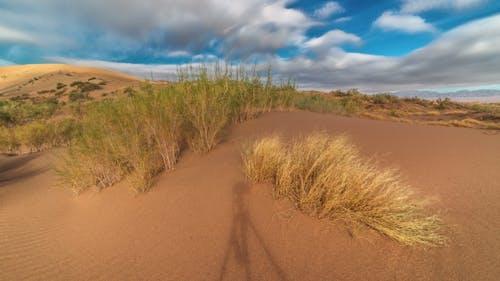 Dune de sable et saxaul dans le parc national Altyn Emel
