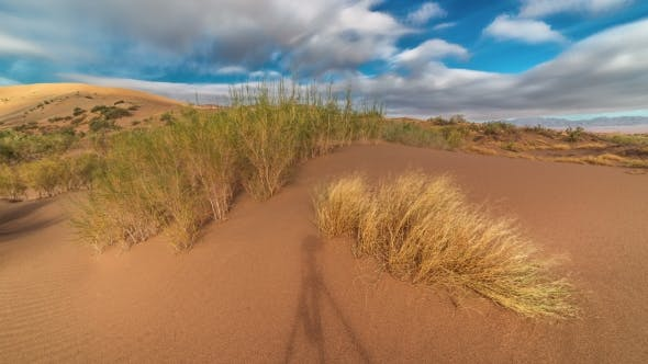 Cover Image for Sand Dune And Saxaul In The National Park Altyn Emel