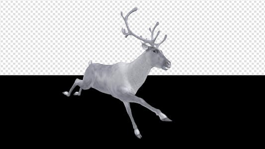 Thumbnail for White Reindeer - Jump Run Loop - Side Angle View