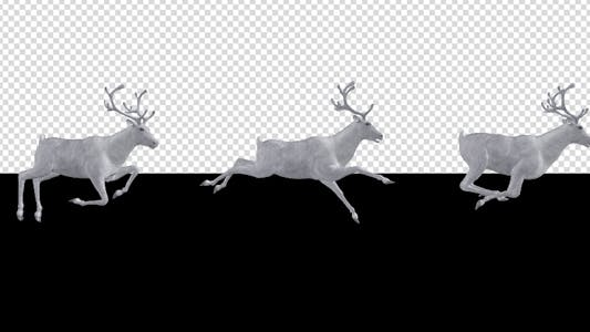 Thumbnail for White Reindeer - Passing Screen - Side View - 4K