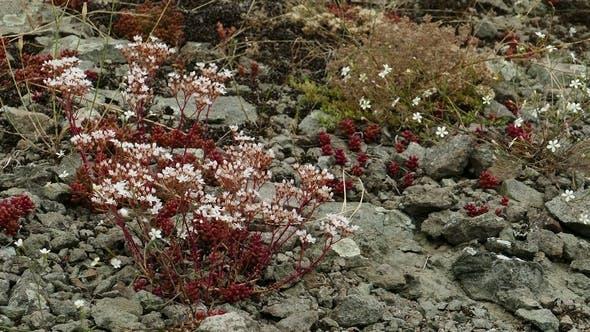 Thumbnail for Beautiful Mountain Flowers 2