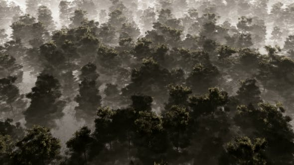 Thumbnail for Morning Fog In Dense Tropical Eainforest