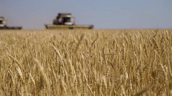 Thumbnail for Combine Harvester. Wheat Harvest.