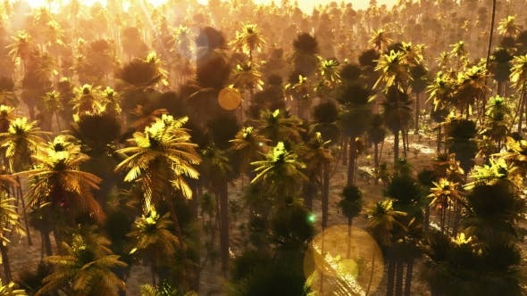 Thumbnail for Tropical Palm Forest At Sunset