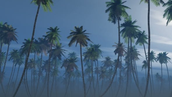Thumbnail for Mysterious Foggy Palm Forest