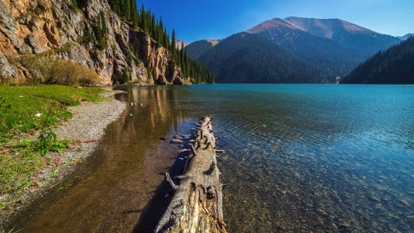 Thumbnail for Trunk Of Pine Tree In The Lake Kolsay. Almaty And Astana, Kazakhstan