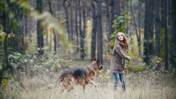 Thumbnail for Young Woman And Her Pet - German Shepherd - Walking On a Autumn Forest, Girl Throws a Stick For Dog