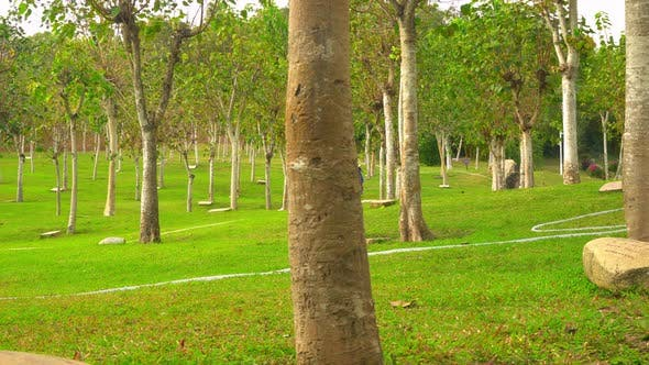 Thumbnail for Beautiful Tall Trees Within City Park in Hainan Island