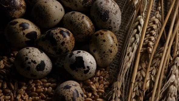 Thumbnail for Quail Eggs Laid On The Grains Of Wheat.