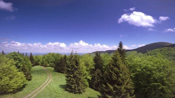 Thumbnail for Aerial Scenic View of a Green Forest