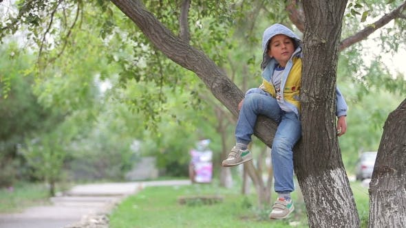 Thumbnail for Cheerful Little Boy Sits On a Tree