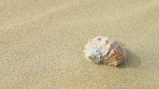 Thumbnail for Falling Sand on the Shell