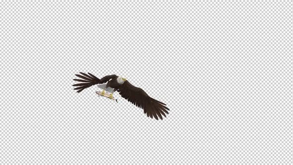 Thumbnail for Bald Eagle with Salmon Fish - 4K Flying Transition II