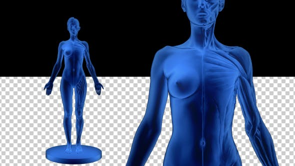 Thumbnail for 3D Woman Outline Silhouette