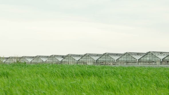 Thumbnail for Wheat Field And Greenhouse