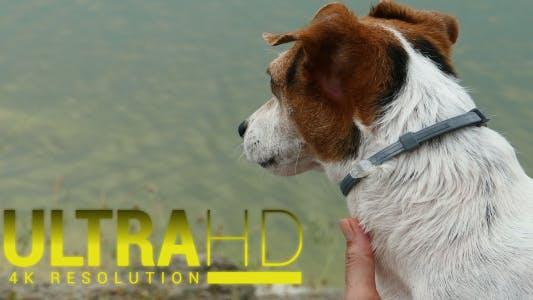Thumbnail for Hund nach dem Schwimmen 2
