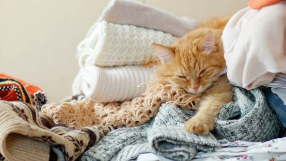 Thumbnail for Cute Ginger Cat Sleeps On a Pile Of Knitted Clothes. Warm Knitted Sweaters And Scarfs Are Folded In