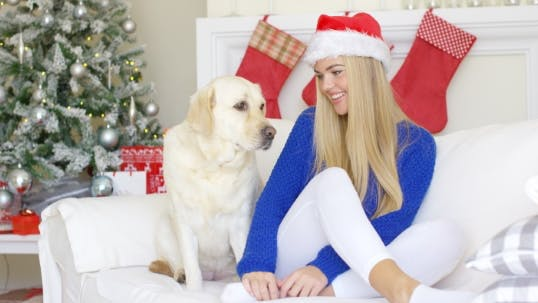 Thumbnail for Christmas Girl With Her Dog Friend At The Couch