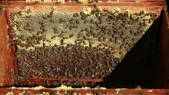 Apiary With Bees Inside Beehive