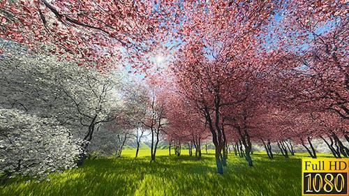 Japanese Sakura Garden